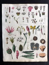 Goldsmith & Shaw 1817 Hand Col Botanical Print. Classes and Orders, parts of Flower and Fruit